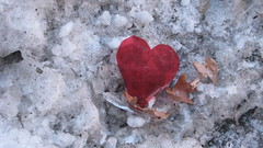 My funny valentine (marensr) Tags: street red white snow chicago ice found garbage heart valentine discarded
