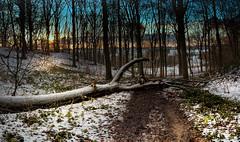 Sunset in winter landscape. (rudi.verschoren) Tags: winter sunset bw color canon woodland landscape landscapes woods belgium breath ngc mm taking 18135 70d