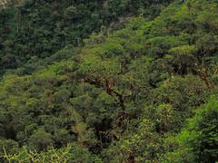 Perú - Amazonas (Galeon Fotografia) Tags: peru forest amazon selva perú bosque wald forêt amazonas pérou forestal amazone лес перу galeonfotografia