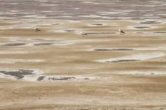 Seagulls at Salt Lake in Formentera (alfonsocarrera@ymail.com) Tags: seagulls lake spain mediterraneo salt formentera balearic