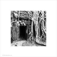 Ta Prohm, Cambodia (Ian Bramham) Tags: tree photo cambodia roots angkor taprohm tombraider bayon ianbramham