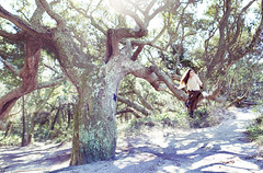 Out on a limb (shenamt) Tags: nature island sitting shadows branches northcarolina twisted ocracoke blackbeard