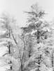 Whiteout (SopheNic (DavidSenaPhoto)) Tags: blackandwhite bw monochrome iso200 35mmfilm hp5 ilford selfdeveloped id1111 canonelan7e pullprocessed