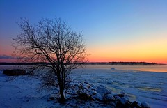 Tree (SSBBSBSSBSBS) Tags: trees winter light sunset sea sky cloud sun snow cold color colour tree ice nature clouds finland skyscape landscape evening countryside seaside view sundown natural cloudy outdoor snowy timber wildlife sunny scene icy scandinavia scape europeanskyscapes