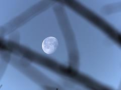 P2265345 (Paul Henegan) Tags: moon blur treebranches earlymorninglight waninggibbous