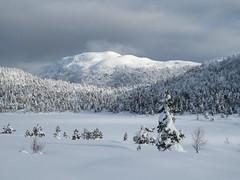 All white (Mrs.Snowman) Tags: snow norway skiing westcoast ålesund østremsetra