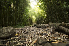 The Pipiwai Path (Derek_Flynn) Tags: travel trees sky tree green leaves forest walking hawaii landscapes rocks hiking path exploring trails maui adventure explore derekflynnphotography
