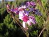 Flower (John Steedman) Tags: africa flower trek kenya afrika kenia afrique eastafrica mountkenya ostafrika 非洲 アフリカ ケニア африка afriquedelest أفريقيا кения 肯尼亚 東アフリカ شرقأفريقيا 东部非洲