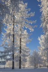 Wintry Vinlnniemi in Kuopio 11 (JP Korpi-Vartiainen) Tags: park street trees winter house snow cold building tree finland landscape living scenery frost january sunny frosty arctic talo lumi talvi maisema koti tammikuu puisto wintry rakennus kaupunki asuminen puut katu huurre kylm aurinkoinen pakkanen omakotitalo 21c talvinen omakoti arktinen huurteinen omakotialue huurteiset jpkorpivartiainen2015