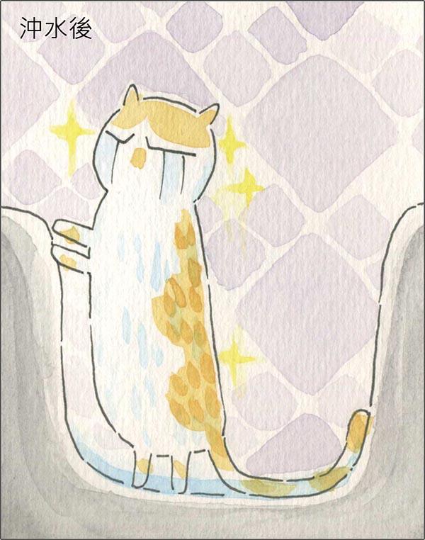 家裡來了一隻貓 貓咪洗澡