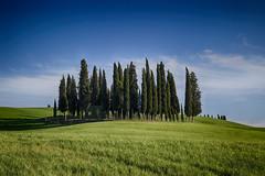 Cipressi ([Rirri]) Tags: italy panorama verde nature colors canon landscapes italia natura val tuscany siena toscana valdorcia colori landascape dorcia panorami cipressi cipresso 100d