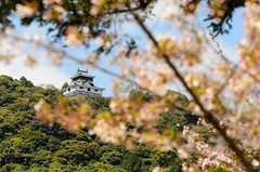 Iwakuni Castle (Picardo2009) Tags: travel bridge castle nature japan landscape puente japanese hiroshima fortification fortress japon castillo iwakuni cherrytrees kintai picoftheday kintaibridge sakuras iwakunicastle castilloiwakuni puentekintai