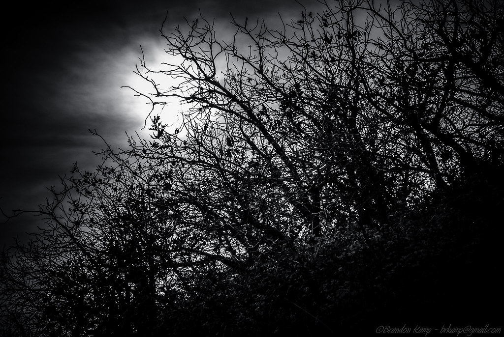 The World's Best Photos of dark and thicket - Flickr Hive Mind