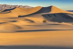 *Mesquite Flat Sand Dunes @ Sunrise* (albert.wirtz) Tags: california usa sunrise nationalpark unitedstatesofamerica dune ngc deathvalley sonnenaufgang sanddunes kalifornien nationalparc sanddnen taldestodes stovepipewellsvillage d700 mesquiteflatsanddunes nikond700 nikkor2470f28 albertwirtz terrianderic