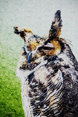 Brian_Great Horned Owl 1 LG Paint FX_032316_2D_FotoSketcher (starg82343) Tags: park wild bird nature animal downs effects md outdoor wildlife brian great maryland owl wallace pasadena filters 2d horned oilpaintfx paintingeffects oilpaintingeffects paintfx
