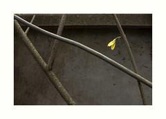Oxymore (hlne chantemerle) Tags: panorama fleurs divers faades rue extrieur vue paysages murs plantes vide urbains photographies minimalisme vgtaux naturesmortes photosderue ruraux