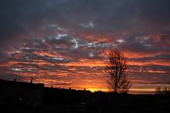 Sunrise in Rayleigh, Essex (Cloggy1970) Tags: morning sky orange cloud sun tree sunrise sillouette
