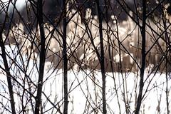 Spring (Hkan Dahlstrm) Tags: tree photography se skne spring sweden uncropped malm f71 ribersborg 2016 skneln xe2 sek xc50230mmf4567ois 6911042016170455