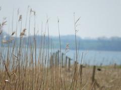 Happy Fence (Landanna) Tags: nature strand landscape denmark natur natuur dnemark danmark als landschap denemarken landskab snderjylland stevning zuidjutland happyfence