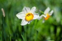 Rotterdam 10-04-2016 SM-20 (Pure Natural Ingredients) Tags: park flowers holland garden spring nikon d70 nederland thenetherlands sigma f18 f28 bloemen euromast zuid 105mm niceweather voorjaar schoonoord d90 50mmoutdoor botanicbotanishetuin