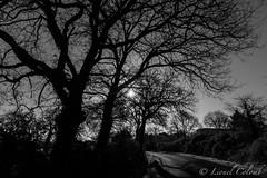 Silhouettes (Lionelcolomb) Tags: road bw sun tree shadows noiretblanc ombre shade arbre noirblanc vendée silouhettes