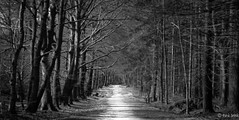 To the forest (Gert Brink) Tags: trees forest think panasonic bos friesland gert brink bakkeveen