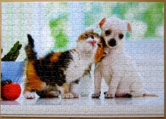 Chihuahua Puppy and Kitten (Leonisha) Tags: dog chihuahua cat puppy kitten chat puzzle hund katze jigsawpuzzle ktzchen welpe