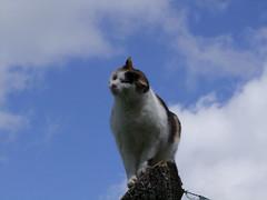 Ma pomme... (Grand-Papp, charrette...) Tags: cat chat humour gata auvergne agata chatte massifcentral hauteloire margeride mauricechevalier hautesterres lobe marjarida