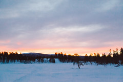 IMG_8823 (Adventurin') Tags: dog sweden stockholm aurora lapland sledding kiruna nothernlights