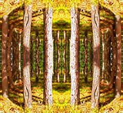 Sunshine in the pines (rhonda_lansky) Tags: trees tree nature sunshine yellow forest woods poetry poem glow outdoor earth michigan surreal sunny places expressive symmetrical photographicart poems visual pinetrees visualart flipped treeart shortstories fantasyart naturescape grayling lansky expressiveart surrealplaces symmetryart symmetricalart mirroredabstract mirroredart mirroredshapes abstractartdesign symmetryartist symmetricalartist abstractoutdoor rhondalansky visualexpressive
