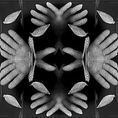 glove symmetry (april-mo) Tags: art symmetry gloves symmetric symtrie blackandwhitepicture experimentaltechnique