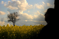 Alex looking at tree in field of rapeseed (nudelbach) Tags: portrait man tree silhouette yellow glasses outdoor portrt gelb mann brille raps baum rapeseed drausen