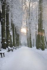winter path (maikdoerfert) Tags: park trees winter white snow germany season alley nikon grove bremen benches winterwalk bürgerpark d90 winterpath winterstroll nikond90
