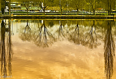 Reflets sur l'Allier. (Crilion43) Tags: france nature eau rivire ciel arbres nuages bateau allier paysage pniche navigation vichy auvergne sapin herbe navire thuya