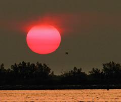 Sun from archive (Robyn Hooz) Tags: sun alberi sunrise alba fiume delta po sole acqua veneto sorgere