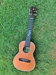 image1 (pazubox) Tags: ukulele newsusingcustomskytenor