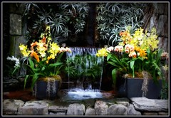 Cascade Falls (edenseekr) Tags: pool orchids waterfalls photopainting