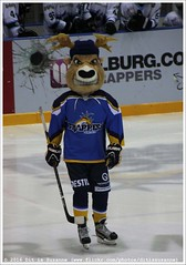 Before the game DESTIL Trappers Tilburg vs Ice Fighters Leipzig, 3 January 2016 (Dit is Suzanne) Tags: netherlands nederland icehockey mascot tilburg bucky mascotte eishockey maskottchen ijshockey views100   zuidbrabant canoneos40d img3282  oberliganord tilburgtrappers  destiltrappers icefighters fearthedeer eishockeyoberliga icefightersleipzig sigma18250mm13563hsm destiltrapperstilburg ditissuzanne  seizoen20152016 saison20152016 season20152016 20152016  03012016 southbrabant