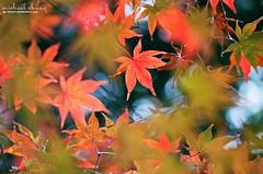 Wallpaper ([M!chael]) Tags: film japan by nikon kyoto taken fujifilm manual nikkor superia400 fm2 ais shisendo xtra400 10525   shisend