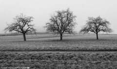 On a cold and misty November Morning 2. (andreasheinrich) Tags: november trees winter blackandwhite cold field fog germany landscape deutschland moody nebel felder kalt landschaft bäume stimmungsvoll badenwürttemberg blackandwhitephotos neckarsulm schwarzweis nikond7000