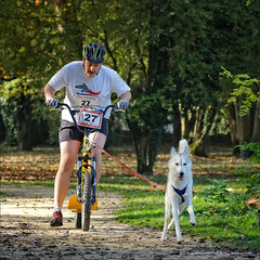 Superdog (stef974run) Tags: chien goldenretriever alpes grenoble canon husky cross course northface superdog bommert canicross boisfranais