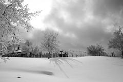 spike. (jrseikaly) Tags: winter shadow blackandwhite lebanon white snow black tree nature weather clouds spike arz cedars