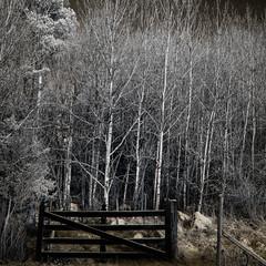 welcome in... (c e d e r) Tags: trees color gate journey dare concept ceder darklyseries