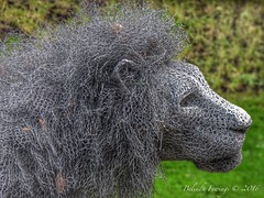 Majestic Lion (Belinda Fewings (3 million views. Thank You)) Tags: street city colour male london art beautiful beauty out outside outdoors seaside wire december arty mesh artistic bokeh creative lion headshot depthoffield artists create colourful lovely sculptures toweroflondon regal chickenwire the beautify royalbeast kendrahaste panasoniclumixdmc pbwa creativeartphotograhy belindafewings aroyalbeast
