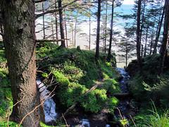 Blumenthall Falls (Oregon State Parks) Tags: oregoncoast northcoast oswaldweststatepark smugglerscove shortsands oregonstateparks oceanshore blumenthalfalls oregonparksandrecreationdepartment oceanshorestaterecreationarea