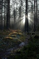 A path in the Nuuksio national park (Ollila, Vihti, 20151129) (RainoL) Tags: november winter forest finland geotagged nationalpark path fin ollila uusimaa 2015 nyland vihti vichtis nuuksionationalpark 201511 20151129 geo:lat=6033320313 geo:lon=2452406240
