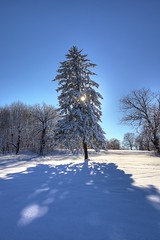 oddball (Estella Sheehan) Tags: blue winter sky sun white snow tree nature evergreen winterscene