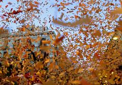 La Taronjada 2016! (Pankcho) Tags: barcelona carnival orange colors festival fun happy fiesta happiness catalonia colores confetti celebration carnaval catalunya felicidad naranja celebracin confeti elborn papelillo taronjada lataronjada