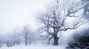 """[194] Natural monument """"Wacht"""" (waterman75) Tags: winter snow tree germany bayern deutschland bavaria 50mm oak nikon d750 nikkor f18 baum eichstätt eiche kinding haunstetten landkreiseichstätt kaising afsnikkor50mm118g nikkor50mm118g"""