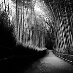嵯峨野竹林, 嵐山, 嵯峨野, 京都, 日本, あらしやま, さがの, きょうと, みやこ, きょうのみやこ, にっぽん, にほん, Bamboo Forest, Tenryu-ji, Arashiyama, Sagano, Storm Mountain, Kyoto, Japan, Nippon, Nihon thumbnail